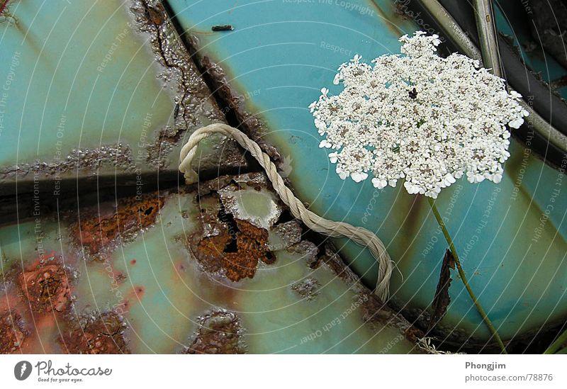 Schrottblume Schnur Verfall Symbiose Rost Wagen Umwelt kaputt Pflanze Wildnis Blume PKW trist Azoren KFZ Vergänglichkeit Makroaufnahme Nahaufnahme Natur