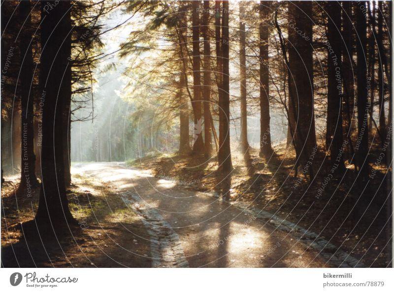 Lichtung im Rückblick Natur schön Baum Sonne Pflanze Farbe Wald dunkel Erholung Herbst Holz Stein Wege & Pfade Wärme Sand Landschaft