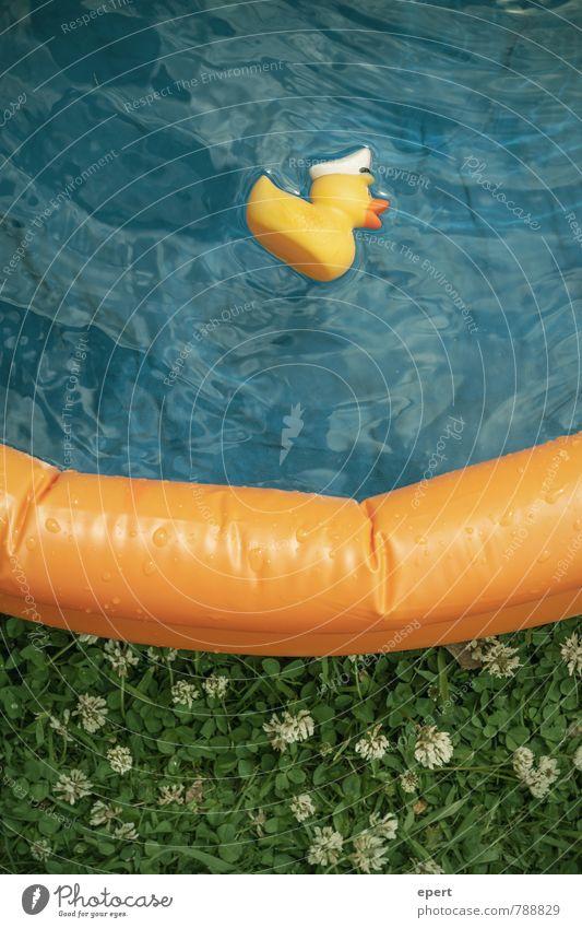 Ente tot, Abendbrot Freude Freizeit & Hobby Ferien & Urlaub & Reisen Sommer Planschbecken Schwimmbad Badeente Schwimmen & Baden nass Kindheit Farbfoto