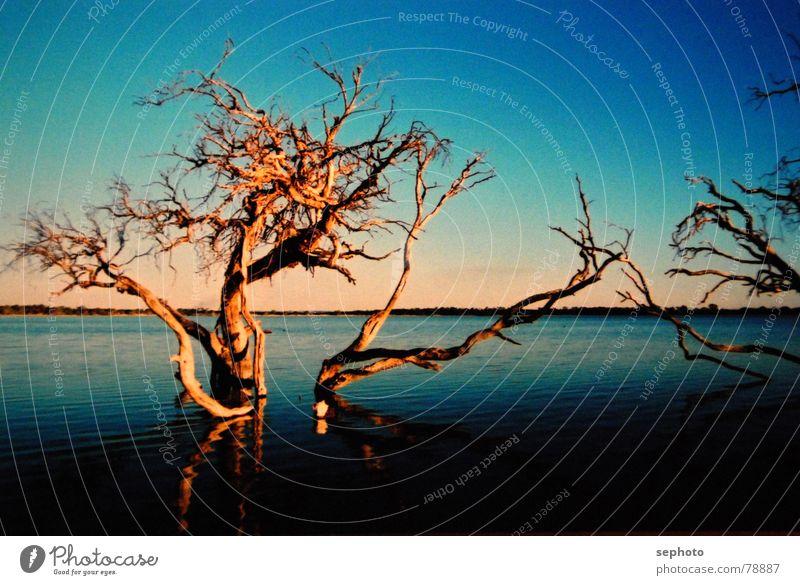 Toter See II Himmel Natur blau Wasser grün Baum Sonne Sommer Wolken Haus Ferne Tod Herbst Wasserfahrzeug braun