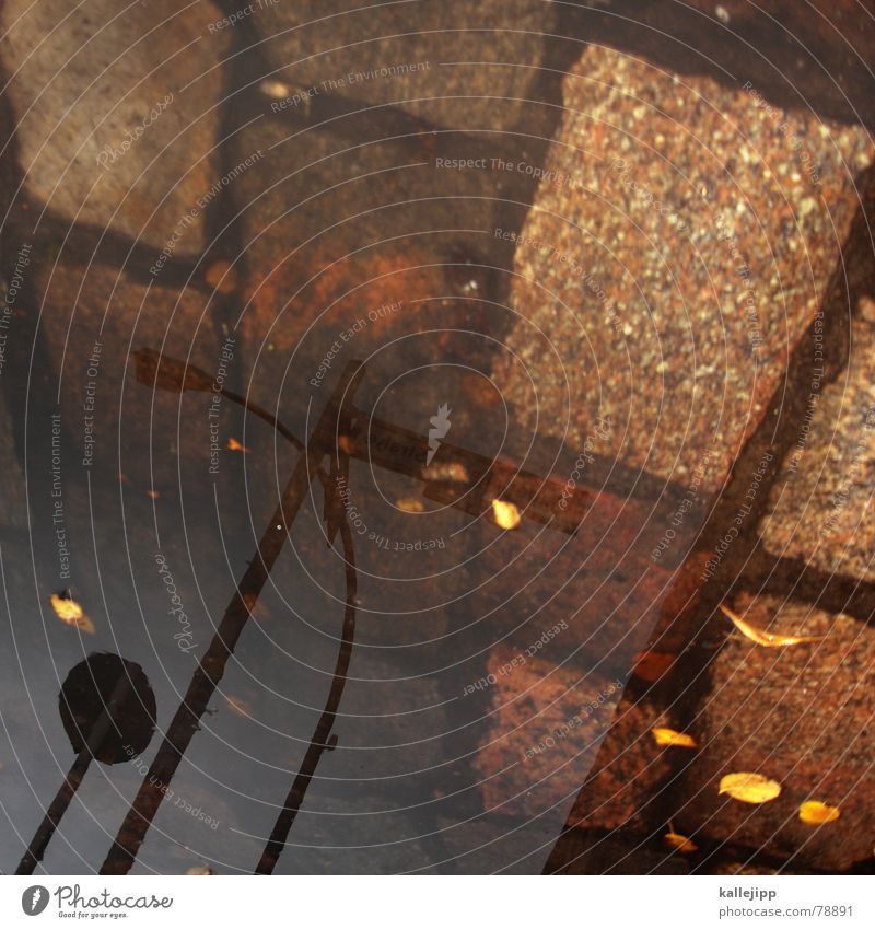 himmel über berlin VII Wasser Blatt Straße Lampe Stein Laterne Kopfsteinpflaster Strommast Pfütze Pflastersteine Regenwasser Straßennamenschild