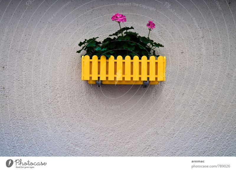 Flower-Power Pflanze Blume Wand Mauer grau Fassade trendy Originalität rebellisch Topfpflanze