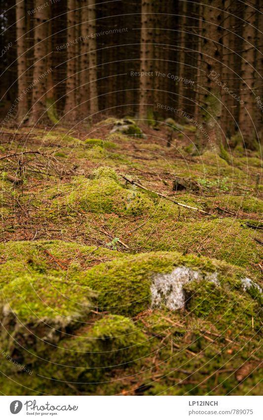 N O R W A Y - mOOs - XXI Natur Ferien & Urlaub & Reisen grün Sommer Baum ruhig Landschaft Tier dunkel Wald Stein träumen Wachstum Erde Tourismus Klima