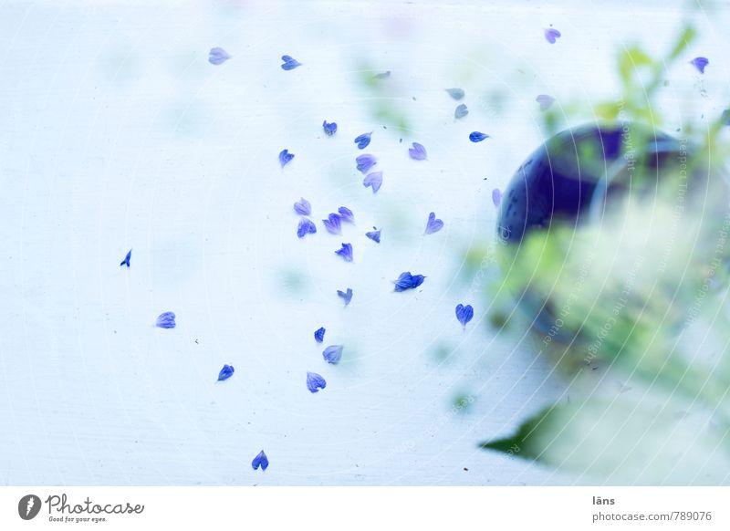 herz.haft | zufällig Blume Gefühle Liebe Blüte Glück liegen Wohnung Häusliches Leben wild Dekoration & Verzierung authentisch ästhetisch Herz Wandel & Veränderung Vergänglichkeit Sehnsucht
