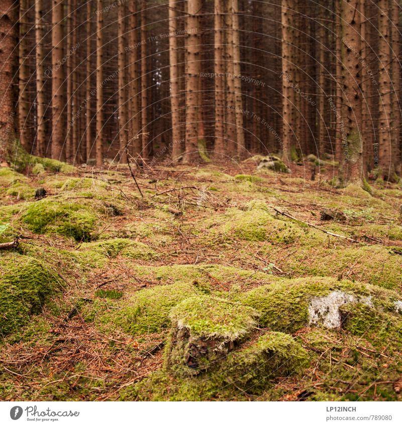 N O R W A Y - mOOs - XII Umwelt Natur Landschaft Tier Erde Sommer Moos Tanne Wald Urwald Stein gehen grün schön Einsamkeit Farbe geheimnisvoll Klima rein Stil
