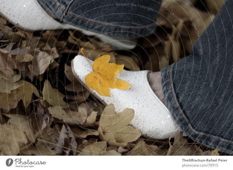 Blattschuh Frau Mensch Natur Baum Blume blau Pflanze Blatt gelb Herbst Fuß Schuhe Stimmung braun Jeanshose trist