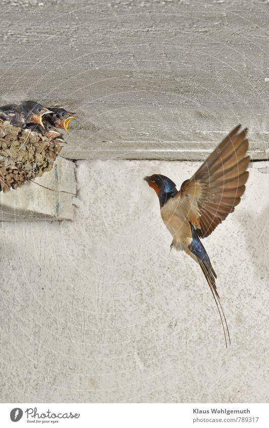 Ich, ich, ich, ich,...... Natur blau schön weiß Sommer Tier schwarz Umwelt Tierjunges Frühling Gebäude grau braun fliegen Vogel elegant
