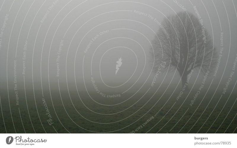 im Nebel Natur Baum Winter Einsamkeit dunkel kalt Herbst Wiese Gras grau Landschaft hell Feld trist fallen