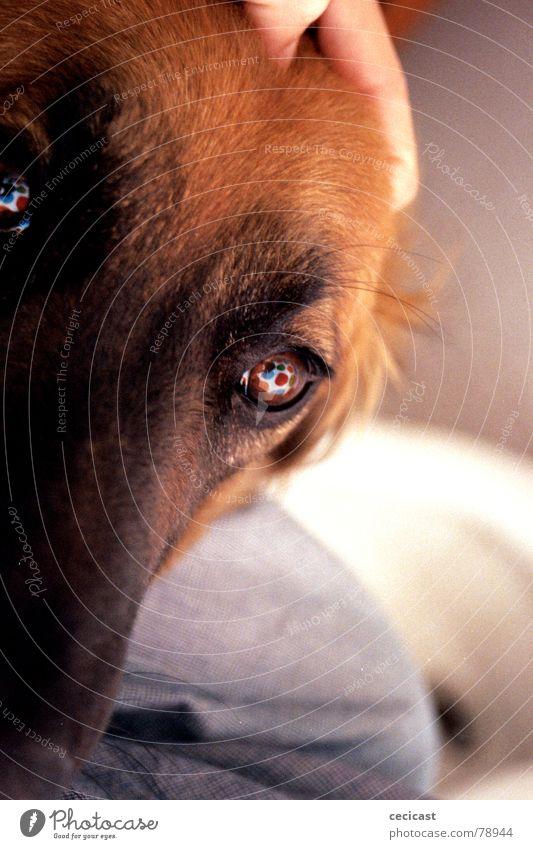 eye dog Liebe