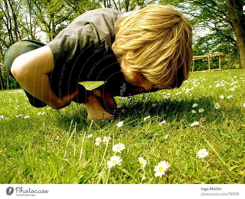 sportlich, sportlich Kind grün Sommer Blume Wiese Junge Frühling