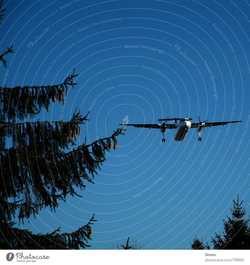 Berührungspunkte Ferien & Urlaub & Reisen Sommer Wald fliegen Beginn Flugzeug Tourismus Luftverkehr Schönes Wetter Flugzeugstart Tanne Flugzeuglandung Fichte