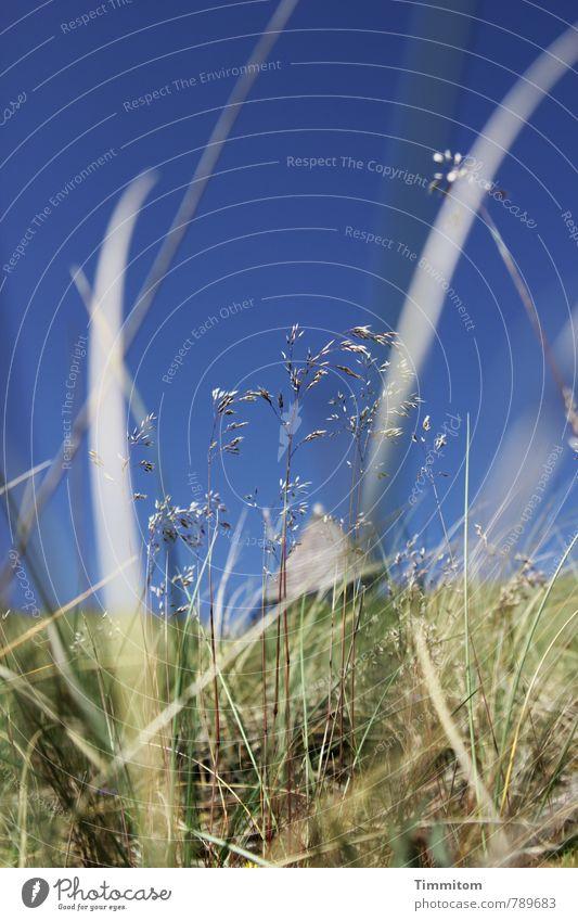 liegen... Ferien & Urlaub & Reisen Umwelt Natur Himmel Schönes Wetter Pflanze Gras Hügel Dänemark ästhetisch natürlich blau grün Gefühle Wärme Seezeichen Halm