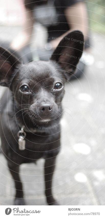 Neo, die Teppichrakete schwarz Auge Tier grau Hund Stein klein Bodenbelag Ohr Fell Haustier Säugetier vertikal Schnauze unschuldig Gefolgsleute