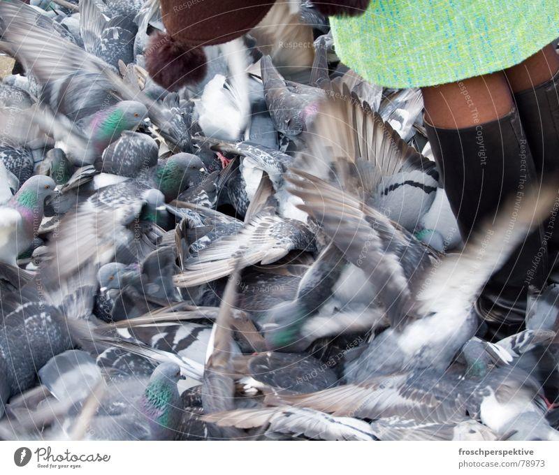 venezia, ti amo Frau Einsamkeit grau Beine Vogel Flügel schäbig Stiefel Taube füttern Schuhe flattern Plage