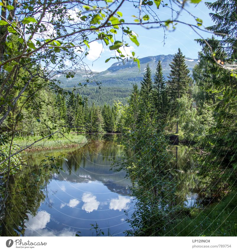 N O R W A Y - Märchen - XVIII Himmel Natur Ferien & Urlaub & Reisen blau Pflanze grün Farbe Wasser Sommer Erholung Landschaft Wolken Tier Wald Umwelt