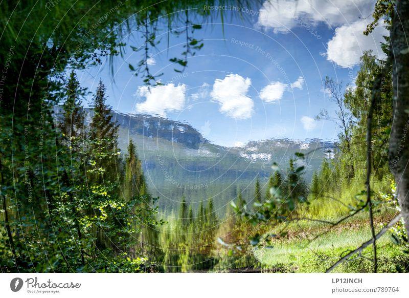 N O R W A Y - Y A W R O N - IX Natur Ferien & Urlaub & Reisen schön Pflanze Wasser Sommer Baum Landschaft Tier Umwelt Berge u. Gebirge Gras außergewöhnlich