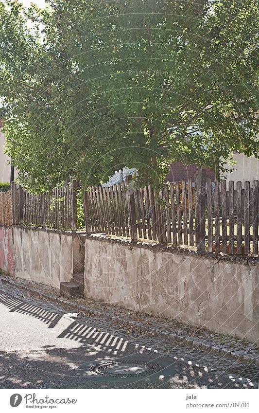 apfelbaum Sonnenlicht Sommer Schönes Wetter Pflanze Baum Nutzpflanze Apfelbaum Bauwerk Mauer Wand Zaun Straße Wege & Pfade Freundlichkeit natürlich Farbfoto