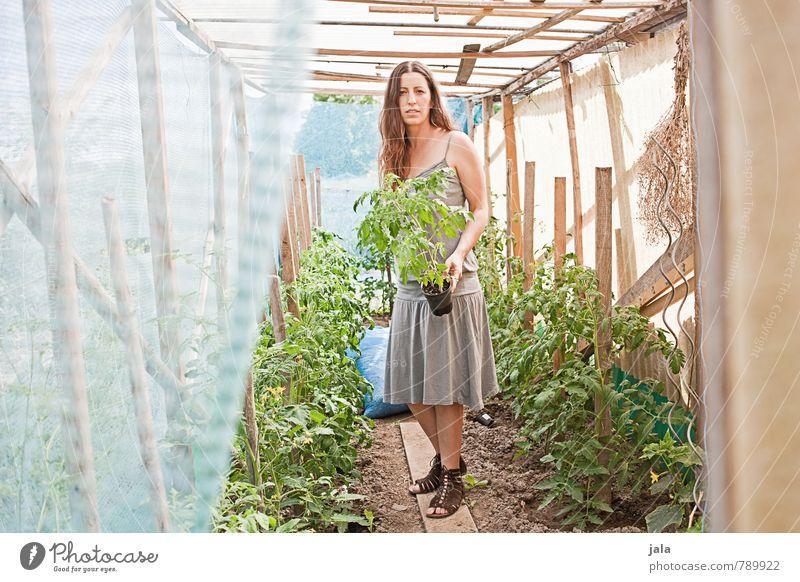 tomatenhaus Arbeit & Erwerbstätigkeit Gartenarbeit Landwirtschaft Forstwirtschaft Mensch feminin Frau Erwachsene 1 30-45 Jahre Umwelt Natur Pflanze Sommer