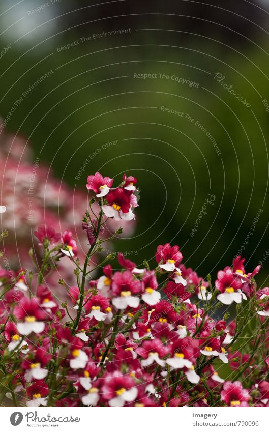 Blütenoberhaupt Natur Pflanze schön grün weiß Sommer rot Blume Freude Leben Glück träumen Wohnung Häusliches Leben Fröhlichkeit