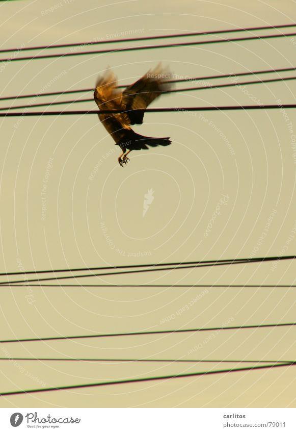 Du hast wohl 'nen Vogel frei Draht Oberleitung Elektrizität parallel durcheinander flattern Energiewirtschaft Pechvogel Bahnhof Freude fliegen Freiheit Raum