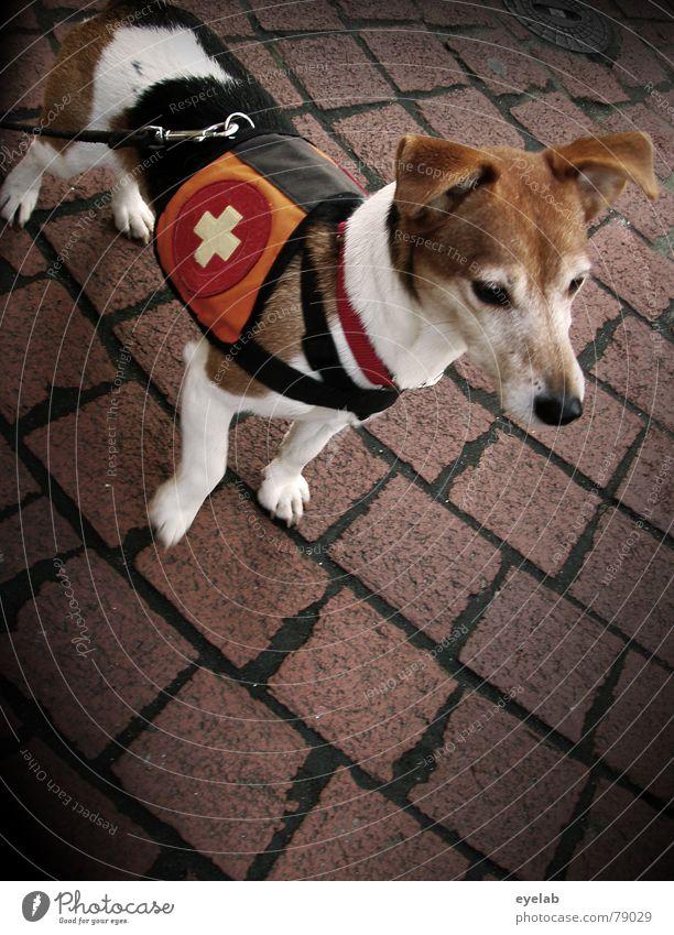 """Rettungs Waldi """"Jack Rabbit Slim"""" Terrier Hund braun grau Beton schwarz Schweiz Hoffnung Neugier Tier Fell Muster Bürgersteig Promenade"""