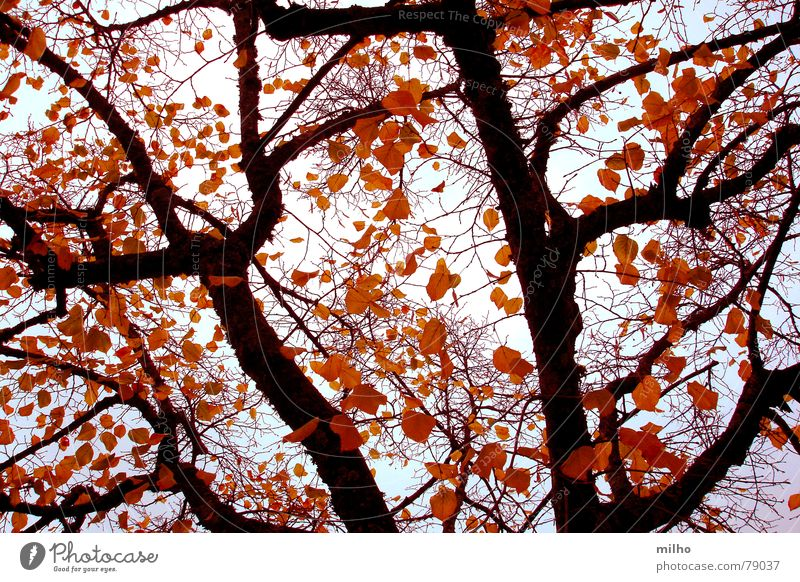 winter Winter trees skyscapes landscapes wallpaper colors contrast leaves