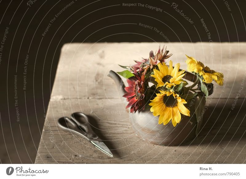 Herbst Blume Blühend Stillleben Schere Holztisch Blumenstrauß Sonnenblume Kannen Farbfoto Innenaufnahme Menschenleer Textfreiraum links Textfreiraum oben Licht