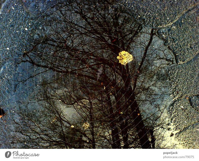 Das letzte Blatt Wasser Baum Winter kalt Herbst grau Stein Regen Wetter nass Ast Spiegel Verkehrswege feucht Kopfsteinpflaster