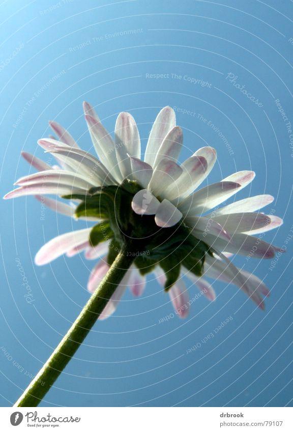 Zwergenpalme Natur Himmel Blume grün blau Pflanze Sommer Wolken Herbst Wiese Blüte Gras Umwelt groß Macht Wachstum