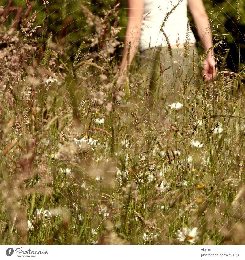 25° schäbig Denken gehen Wärme Wiese grün braun Blume durcheinander T-Shirt Oberkörper Spaziergang Physik Sommer Gras Trauer Grünfläche Pflanze Wildnis Umwelt