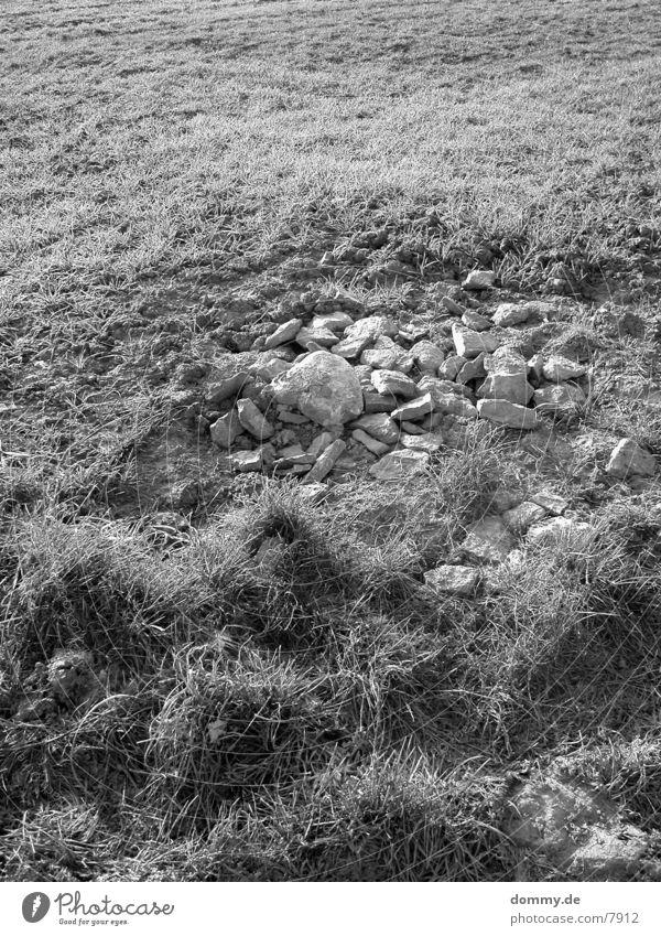 Steinchen schwarz weiß Schwarzweißfoto kaz