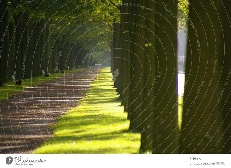 Weg Baum grün Licht Wiese Gras Blatt Wege & Pfade Bank Schatten Brücke