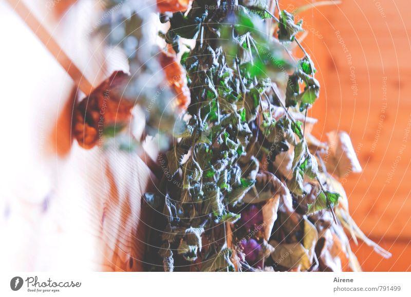 Trockenfutter Natur grün Gesundheit Lebensmittel orange authentisch genießen Dach trocken Kräuter & Gewürze Gemüse Duft Bioprodukte hängen nachhaltig Nostalgie