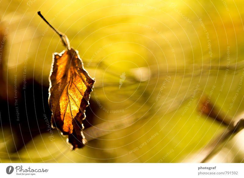 Herbst Natur Pflanze Sommer Landschaft Blatt Kunst Kraft Medien Willensstärke Reinheit