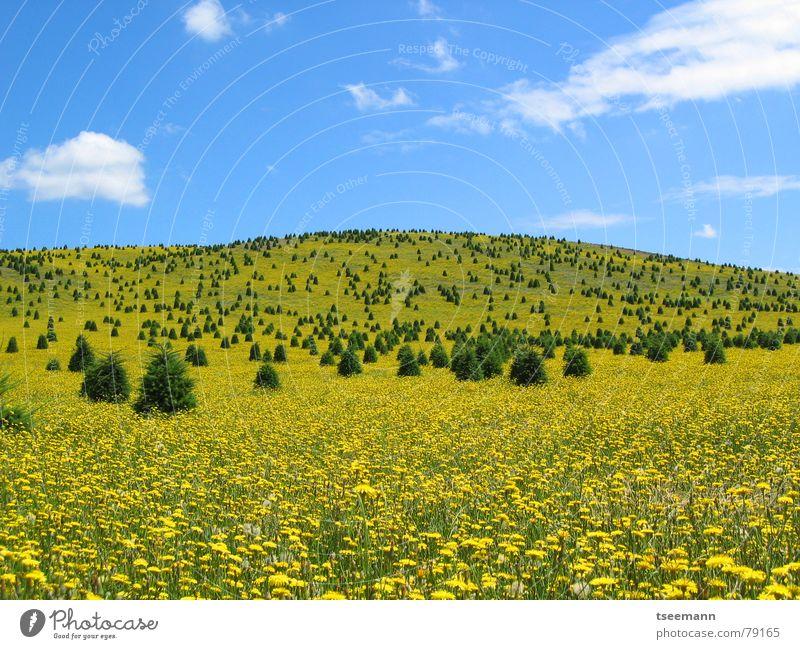 Gelbe Wiese Hügel gelb Blume Baum USA Amerika Oregon Himmel Wolken Frühling blau State Park Silver Falls Blumenwiese Blumenteppich unberührt Naturschutzgebiet