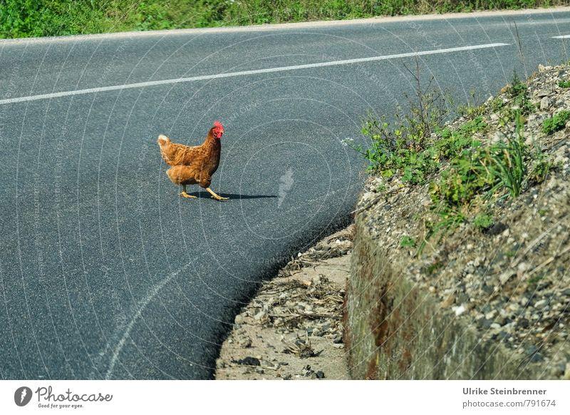500 | Die Kurve gekriegt grün Tier Straße Gras grau gehen braun frei verrückt laufen Geschwindigkeit gefährlich Neugier Gelassenheit Risiko entdecken