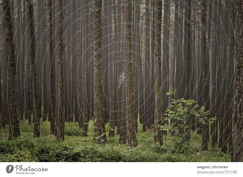 Forest Natur grün Pflanze Sommer Baum Erholung Landschaft ruhig Wald kalt Frühling Gras Freiheit braun Freizeit & Hobby Nebel