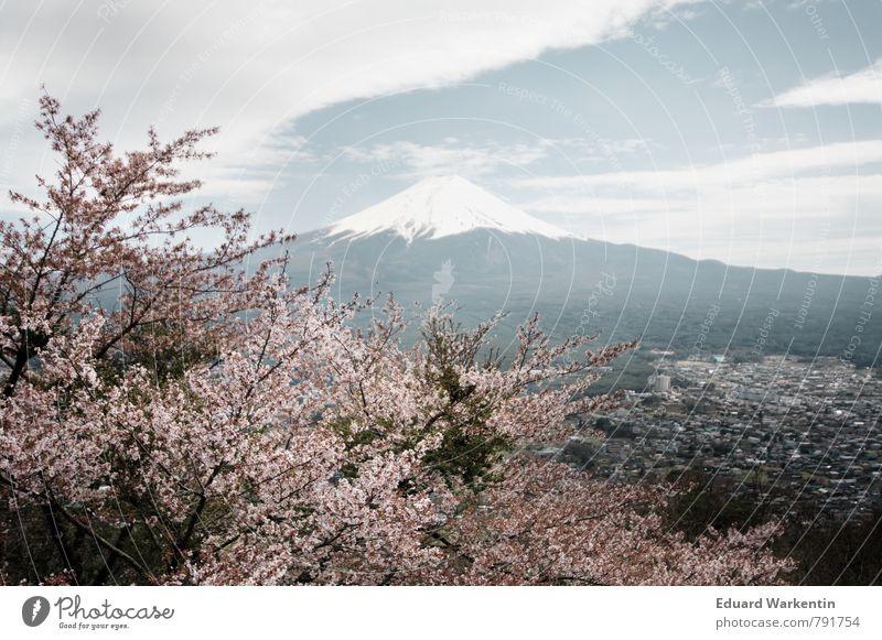 Fujiyama Natur Pflanze Luft Himmel Wolken Berge u. Gebirge Fujijama Idylle Kitsch Japan Kirschblüten Baum Frühling Mount Fuji Gedeckte Farben Außenaufnahme