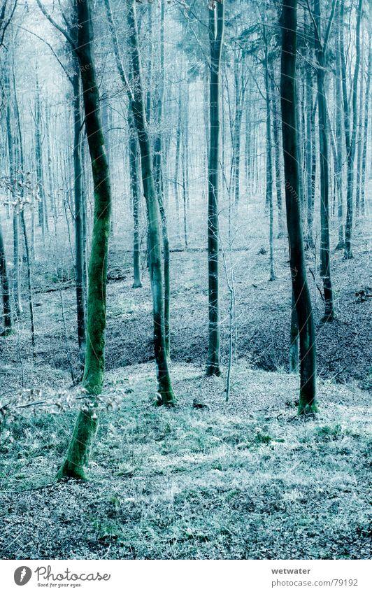 kalter Wald Natur Baum blau Winter Blatt Wald kalt Holz Deutschland Holzmehl