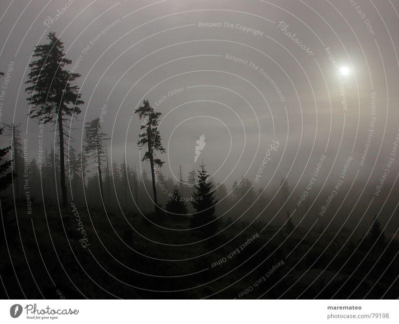 und ob ich schon wanderte im finsteren Tal... Natur Baum Winter schwarz Wald dunkel kalt Herbst Silhouette Tod Berge u. Gebirge grau Traurigkeit Regen Stimmung wandern