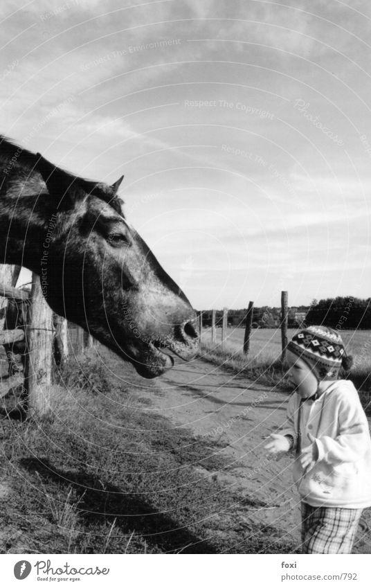 Das Kind & das Pferd Mensch sprechen Gefühle Angst lustig klein groß Tiergesicht Kindheit Neugier Mut obskur Kleinkind skurril