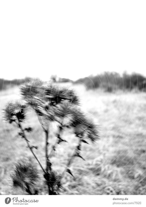 still Blume Schwarzweißfoto Landschaft kaz