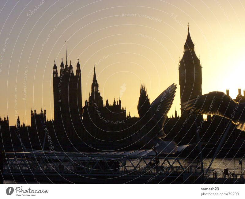 Möwiges London Themse Möwe Vogel Gegenlicht Sonnenuntergang England Big Ben Schatten Flügel fliegen