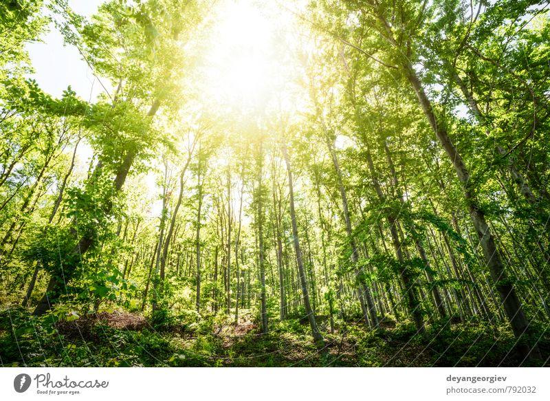 Sonnenlicht zwischen den Bäumen im Wald schön Umwelt Natur Landschaft Pflanze Herbst Nebel Baum Blatt Park Wege & Pfade natürlich grün Licht Jahreszeiten sonnig