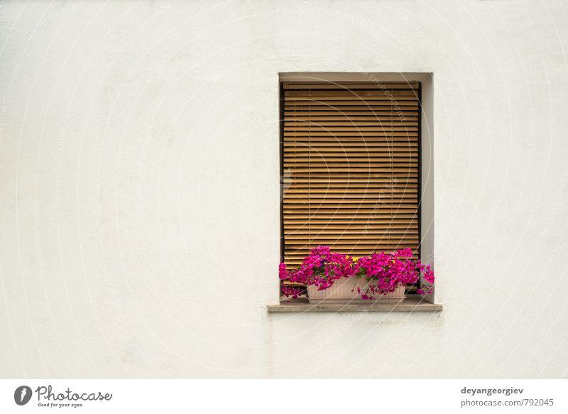 Weiße Wand und Fenster im venezianischen Stil mit rosa Blumen Topf Ferien & Urlaub & Reisen Tourismus Insel Haus Kultur Pflanze Stadt Gebäude Architektur
