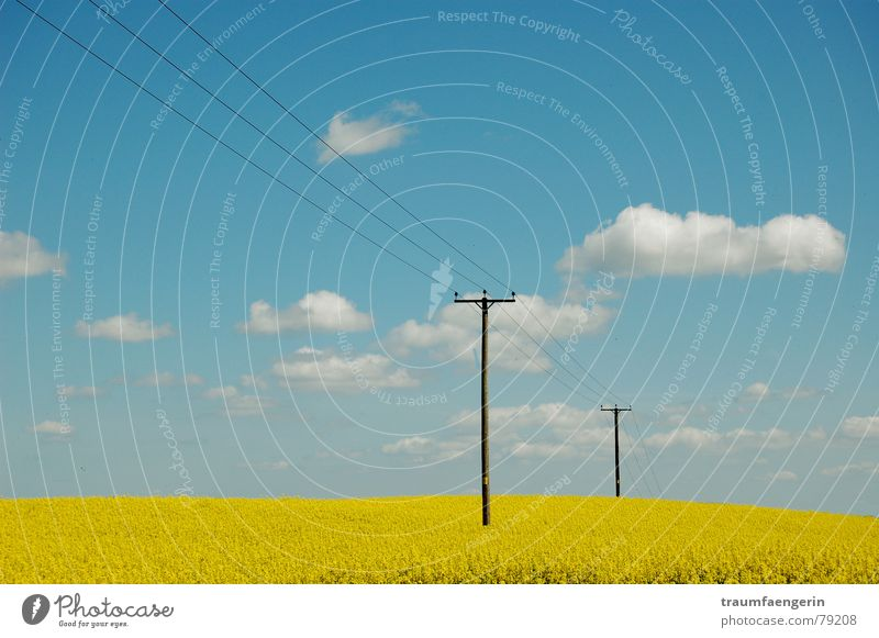 england im frühling Natur Himmel Blume blau Sommer Wolken gelb Wiese Frühling Landschaft Feld Elektrizität Erdöl Strommast England Raps