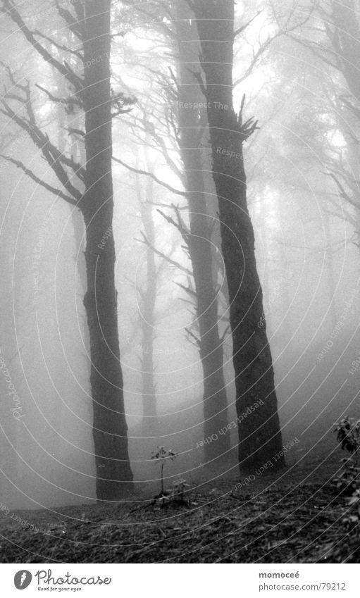 verhangen die zweite schön Baum Wolken ruhig Einsamkeit Ferne Wald Traurigkeit Nebel Suche leer Trauer Sehnsucht