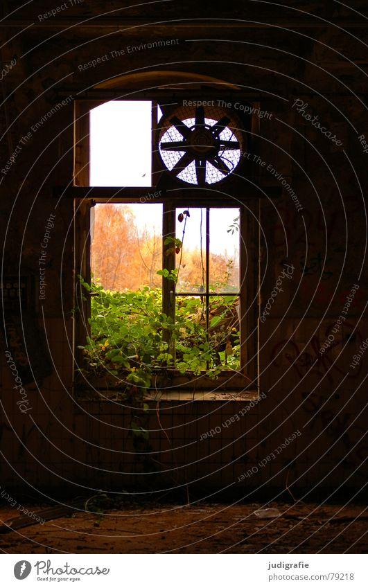 Industrieromantik III Belüftung Ventilator nutzlos Produktionsstätte notleidend Backstein Angst Ruine Fassade Putz Fenster Fensterkreuz Pflanze Baum Herbst