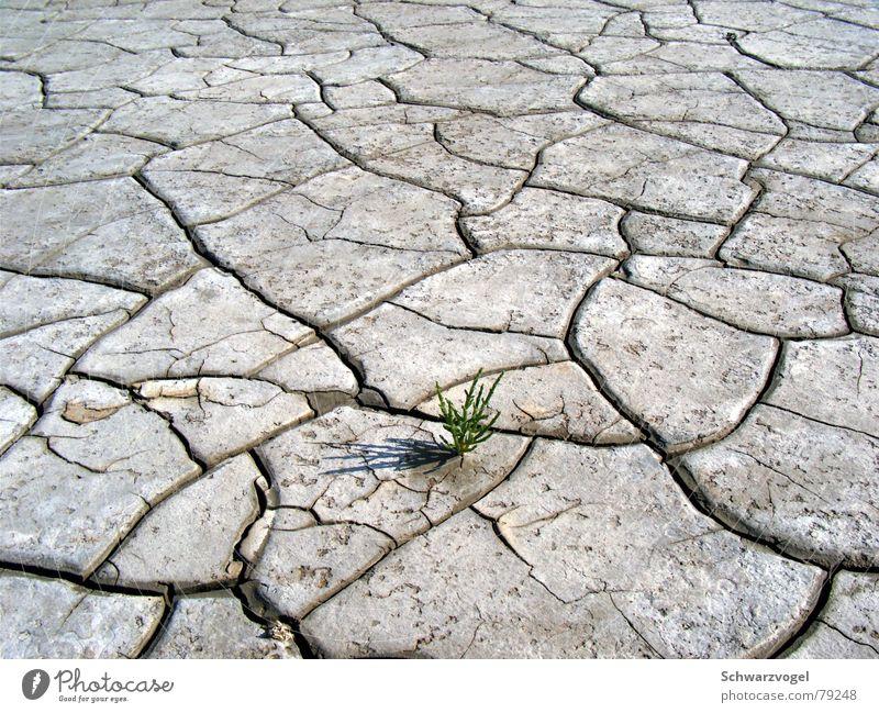 Keep your head up Natur alt grün Pflanze Gras grau Wärme Landschaft braun klein frei Erde trist stehen bedrohlich einfach