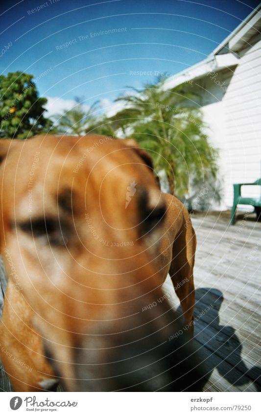 dog Himmel Sommer Haus Hund braun Gastronomie Florida